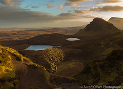 Catching the last of the light on the first day of 2019... (sarahOphoto) Tags: 6d canon highlands kingdom scotland uk united quiraing isle skye landslip mountains loch lake water sky clouds sunset lone tree landscape nature tourist travel new year years day island
