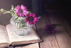 """Winter daisies"" (mariajoseuriospastor) Tags: oldbook flowers daisies stilllife"