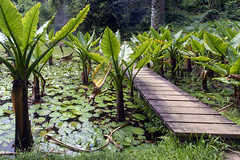 Botanical Garden / Ботанический сад (dmilokt) Tags: природа nature пейзаж landscape лес forest дерево tree парк park сад garden цветок flower dmilokt пруд озеро вода water lake nikon d850