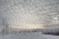 Зимний день (olegkulishov) Tags: природа зима небо погода пейзаж