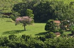 Rocinha distante (Márcia Valle) Tags: roça verde green juizdefora minasgerais brazil brasil zonarural rurallandscape paisagemrural márciavalle nikon d5100 verão summertime tropicallandscape tree árvore interiordobrasil