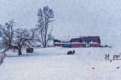 The Calm Of Winter (garywitte845) Tags: landscape barn horse fence trees snow winter texture iowa saccounty rural farm magicunicornverybest