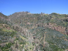 IMG_8057 (wallygrom) Tags: madeira funchal monte botanicalgarden jardimbotânicodamadeira cablecar teleferico