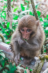 台灣小獼猴 Young Formosan macaque (eHsuan) Tags: 台南 a7iii a73 a7m3 taiwan tainan 台灣 travel 旅行 旅遊 outdoor walk chinese 柴山 壽山 猴子 鳥