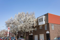 White Tree (Tom Ipri) Tags: canoneos5dmarkiv trees spring philadelphia philly