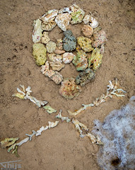 Skull of death coral (art with a message) (Thijs de Groot Photography) Tags: coral reefs death skull thijsdegroot thysson costa rica coralreef nature globalwarming tropical sea ocean seawater art underwater fish ecosystem 80d