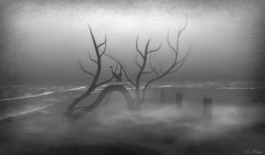Muted (Loegan Magic) Tags: secondlife tree branches sea blackandwhite monochrome sky fog foggy landscape