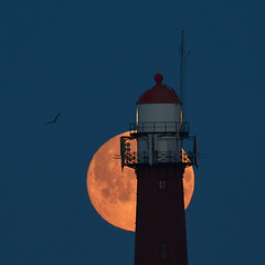 Super Maan Licht Baken (zsnajorrah) Tags: lighthouse harbour moon supermoon bird silhouette moonset earlymorning bluehour beforesunrise luckyshot canon 7dmarkii ef70200mmf4l ef2xiii netherlands ijmuiden