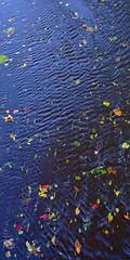A Question of Balance – Autumn 2018 (Paul Henegan) Tags: 21crop autumn leaves reflections ripples stream taijitu fb