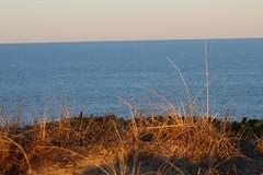 Dune Grass 3 (NatureChaserPhotos) Tags: marconi wellfleet capecod trees sunset beach dune dunegrass sky ocean nature