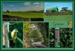 Green Theme (pollylew) Tags: green collageingreen greenfinch greenfields greentractor hawthornleaves birdfeeder