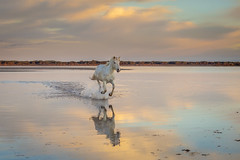 O-LA-LAAAA (Nedko Nedkov) Tags: camargue france horse white morning sunrise