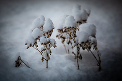 More Snow (Phil Roeder) Tags: desmoines iowa snow winter nature weather canon6d canonef70200mmf4lusm