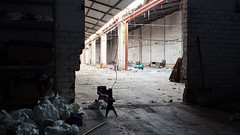 The remains of Somedhar. (franleru1) Tags: architectureindustrielle belgique belgium brussels bruxelles francoiselerusse omd omdem5 olympus somedhar urbex architecture architecturecontemporaine contemporaryphotography documentary fineartphotography industrial streetphotography urbain urban