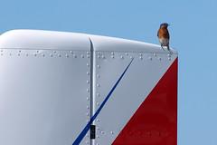 170408_128_SnF_Bird (AgentADQ) Tags: sun n fun flyin expo airshow air show lakeland florida 2017 airplane plane aviation bluebird bird
