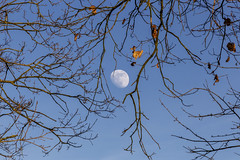 MO[O]NDAY | MON[D]TAG (*Photofreaks*) Tags: moon monday montag nature natur äste zweige twigs branches tree baum himmel sky mond adengs wwwphotofreakseu
