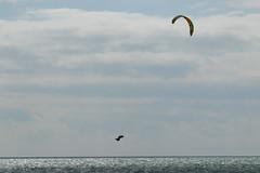 2018_08_15_0193 (EJ Bergin) Tags: sussex westsussex worthing beach seaside westworthing sea waves watersports kitesurfing kitesurfer seafront lewiscrathern