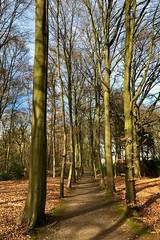 (Robbie6711) Tags: corversbos 'tgooi 'sgraveland nederland netherlands zonnig sunny landscape landschap nature natuur bladeren leaves bos forest bomen boom trees tree