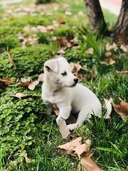Puppy, the healer. (princessmissc) Tags: aww pet dog puppy
