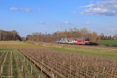 67613 Capitole (francoispobez) Tags: cmr sncf vougeot train zug tm machine bb67613 bb 67400 vigne railroad capitole bourgogne railway france