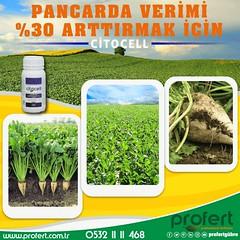 pancar (Profert Gübre) Tags: pancar şekerpancar sugar tarım agro agriculture ziraat