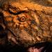 Eye of Tyrannosaurus