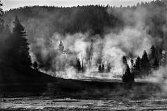 Morning Steam (chrislon28) Tags: fumarole yellowstone nationalpark film canon canonfilm ftb fd plusx kodak landscape 35mm blackandwhite wyoming steam trees forest silhouette
