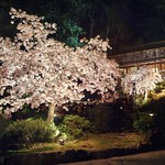 Hanami at night thumbnail
