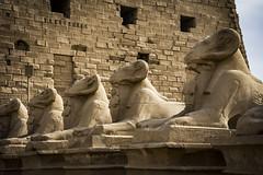 EXIPTO 2018 (Sergio Casal) Tags: aprobado exipto egipto egypt travel trip wanderlust africa luxor portrait giza cairo