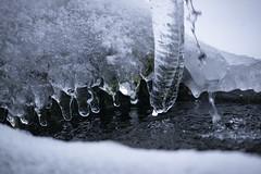Bayrischer Wald! Foresta Bavarese! (Claudia Zuber) Tags: bayrischerwald foresta wald forest winter inverno neve snow schnee unfall incidenti linci luchs