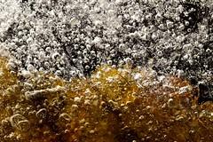 Glace, jeux de couleur ( feuille emprisonné dans la glace ) (Anabelle67) Tags: hiver naturelovers fantasticnature nature nikonfrance nikonphotographie nikoneurope nikond5300 naturebynikon nikon tamron90mmmacro tamroneurope tamronphotography withmytamron tamronfrance tamron90mmf28 tamron flickr photography photographie photo photooftheday macroworld macrogardener macrocapture macroofourworld macrophotographie magnifique macroperfection macrodreams macrolover macro colorful