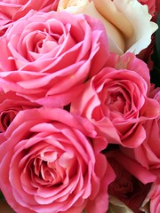 Beautiful roses in a vase in my daughters home (daveandlyn1) Tags: roses pink smartphone cameraphone huawei pralx1 p8lite2017 psdigitalcamera closeup white buds flowers tightheads
