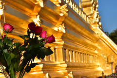 Bagan, Shwe vi gone (Neal J.Wilson) Tags: burma myanmar travel nikon colors colour bagan shwevigone tulips flowers golden gold temple stupa religion buddhism buddhisttemple asia