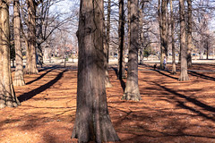 Tower Grove Park (Fred Ortlip) Tags: dogs taxodiumdistichum towergrovepark baldcypress winter dogwalking stlouis