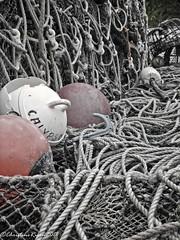 Calypso (christine rigon) Tags: filets pêche pêcheur poissons mer commerce fish filet