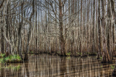 Louisiana Swamp (D-W-J-S) Tags: landscape green water trees swamp louisiana neworleans scape salonsfiap salonpossible flickr trybpe 2019bpe32robinhood salonsbpe saloncategories