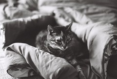 Lucy Pt. II (luke_coleman_film) Tags: cats blackandwhite bw 35mm film ilford125 ilford