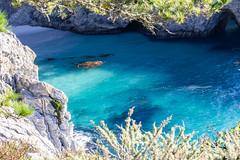 Point Lobos, December 2018 #2 (satoshikom) Tags: canoneos6dmarkii pointlobosstatenaturalreserve carmelbythesea carmel californiastateparks californiacoast canonef100400mmf4556lisiiusm chinacove