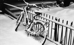 Snowed in (Explored 03/04/2019) (ocarmona) Tags: bicycle snow winter 2019 february ice toronto film 35mm kodak retina iic schneider superpan 200asa hc110