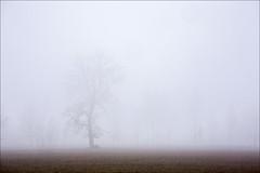 20181228. Fog. 7280 (Tiina Gill (busy)) Tags: camerapainting intentionalcameramovement icm estonia creative winter tree nature fog outdoor