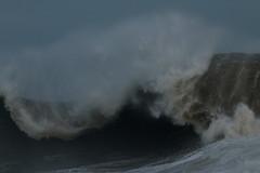 IMG_0639 (monika.carrie) Tags: monikacarrie wildlife scotland aberdeen waves