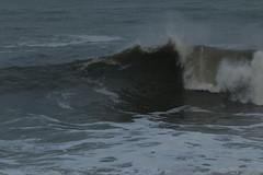 IMG_0570 (monika.carrie) Tags: monikacarrie wildlife scotland aberdeen waves