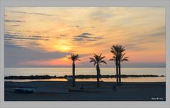 Tardes de invierno (El Palmeral, Almería) (Jose Manuel Cano) Tags: invierno winter almería españa spain nikond5100 paisaje landscape costa coast playa beach palmera palm color colour nube cloud sunset