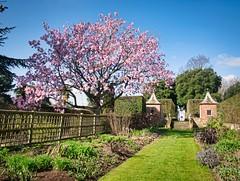Spring Blossom (bart7jw) Tags: nt national trust hidcote