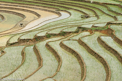 Man In A Field (Nick Mayo/RemoteAsiaPhoto) Tags: paddy vietnam laocai yty