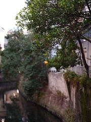 (Yakinik) Tags: 富士フイルム fujifilm gfx 50s japan tokyo 東京 yakinik gf 110mm f20 r lm wr 日本