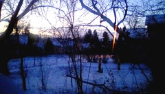 Early winter morning - TMT (Maenette1) Tags: morning sunrise winter trees backyard newyear menominee uppermichigan treemendoustuesday flicker365 allthingsmichigan absolutemichigan projectmichigan michiganwinter