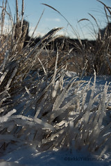 January 2019 (Bekki Y. Photography) Tags: lakemichigan ice winter frozen snow greatlakes chicago beach cold grass beachgrass