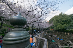 Otonashi Shinsui Park (takashi_matsumura) Tags: otonashi shinsui park oji kitaku tokyo japan ngc nikon d5300 音無親水公園 王子 北区 東京 桜 sakura cherry blossoms afp dx nikkor 1020mm f4556g vr