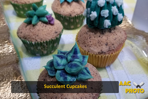 "Succulent Cupcakes • <a style=""font-size:0.8em;"" href=""http://www.flickr.com/photos/159796538@N03/46876586274/"" target=""_blank"">View on Flickr</a>"
